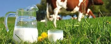 schommelende melkprijs
